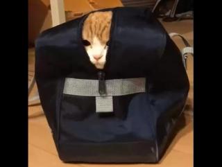 Котик в сумке