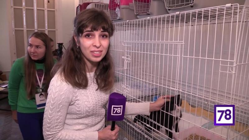 Кот в коробке 18.11 Life78