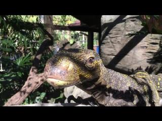Тренировка крокодилового варана.