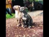 Год жёлтой земляной собаки будет хорошим