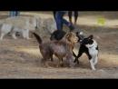 Viasat Nature | Животные, которые изменили историю : Спутники [4/6]