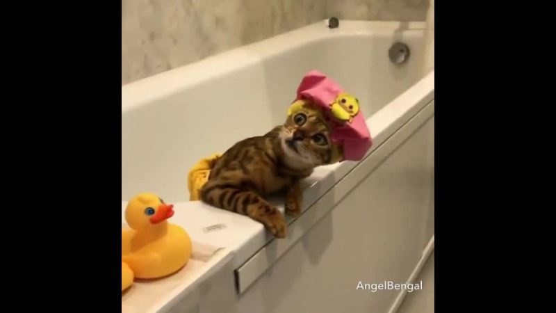 Time to Bath and Wine coub