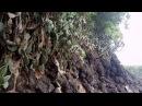 Натуральный органический уксус из плодов Кактуса Опунции