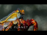 Lightfoot crabs ambushed by eels and octopuses - Blue Planet II Episode 6 Preview - BBC One