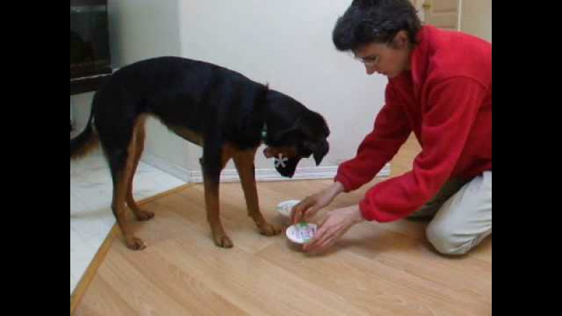 Mind Games for Dogs Shell Scent Game Dog Indicates correct container where scent is