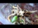 Орхидеи Лучший метод размножение корнями Часть 3 Orchids Reproduction by roots Part 3