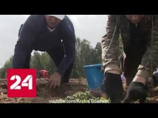 В Сеть выложили кадры, как #Лукашенко с сыном Николаем убирают картошку