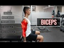 The Best Science-Based Bicep Workout | ARMS (Part 1/2)