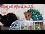 Сказка про хомяков от канала ХОМКИ. Хит 2017!  a fairy tale about hamsters