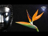 Buddha Zen Bar the Best of Buddha Zen Bar 2018 HD