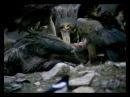 052 El Hombre y la Tierra - Los matadores inocentes. El Lobo