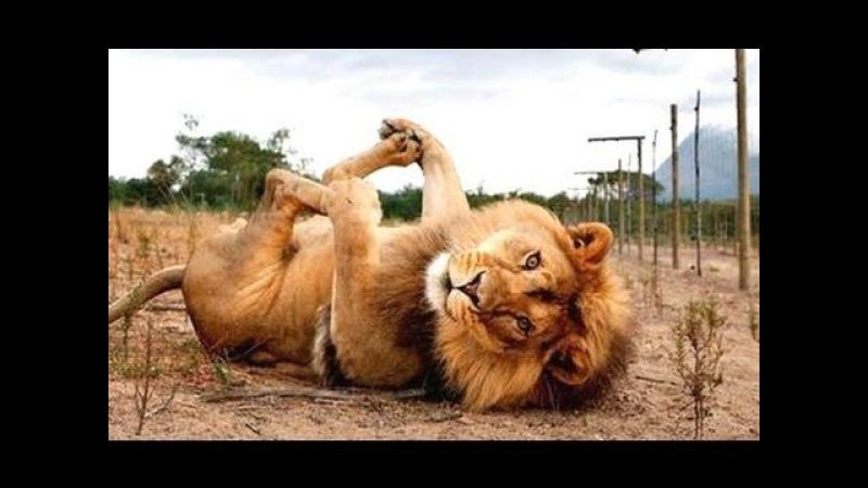 Śmieszne zwierzęta - zabawna filmy zwierzęcych. Kompilacja