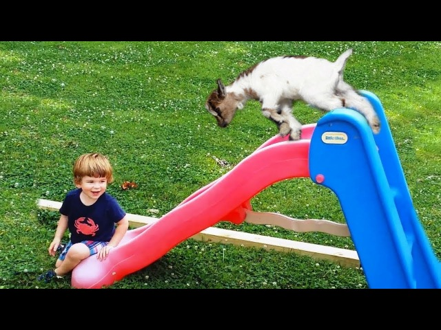 Funny Babies and Goat Playing on Slides | Funny Babies and Pets