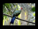 Animal Planet - Beautiful Exotic Birds with Relaxing Music and Bird Sounds
