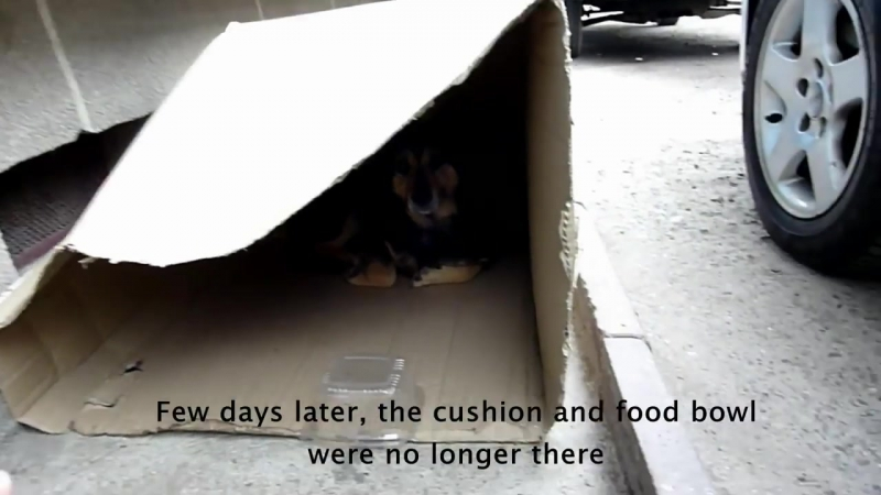 Homeless dog living in a cardboard box gets rescued has a heartwarming transfo