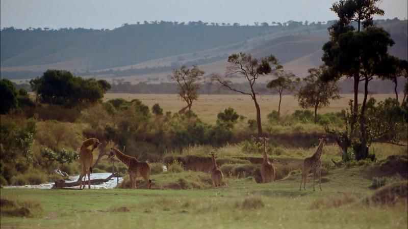 Африка: Серенгети / Africa: The Serengeti (1994)