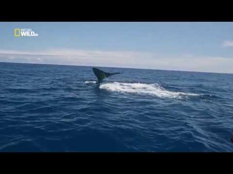 Глубоководные киты / Whales of the deep (1080p)