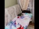 Атака на диван