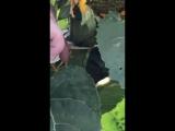 Жестокая казнь (VHS Video)