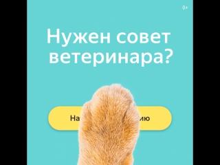 Консультации ветеринаров в Яндекс.Здоровье
