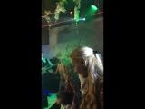 sever_elena_:Максим Галкин танцует с дочкой Лизой,а Алла Пугачева с сыном Гарри.