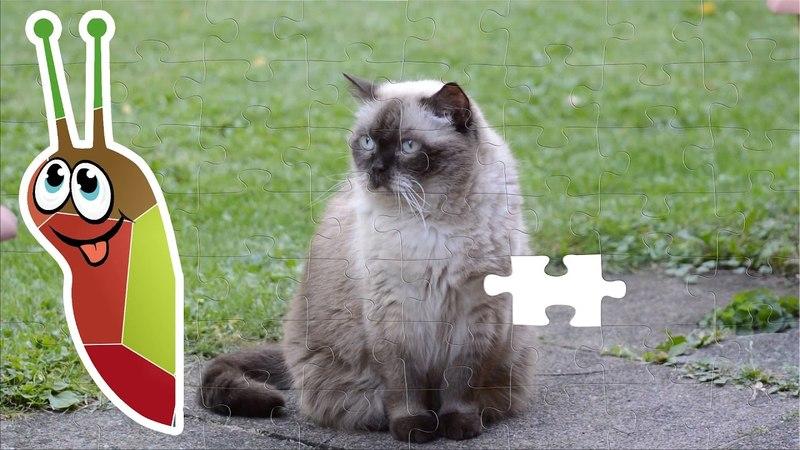 Пазлы кошки. Фото превращается в видео. Смотреть до конца