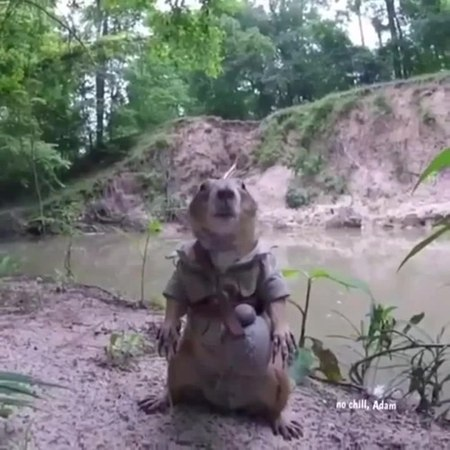 You don't want any problems with this Prairie Dog 😎🔥 coub