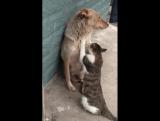Они жили как кошка с собакой. Он её охранял, а Она его любила.🐾
