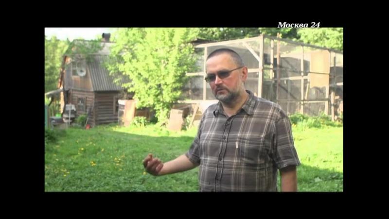 Хищные птицы (документальный фильм)