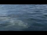 Скрипка и море....Edvin Marton - Tosca Fantasy... Музыка души.mp4
