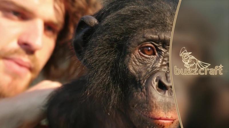 Почему в мире так много животных