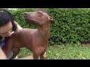 Введение в собаковедение Серия №27