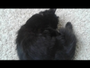 Мой Кот Боня №2