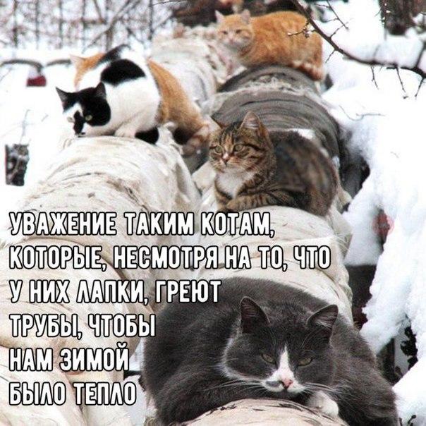Фото 169481924