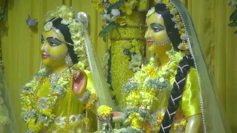 Сегодня Васанта Панчами Великолепный Даршан и Арати из Маяпура