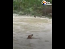 Везучий собак