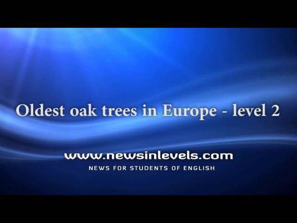 Oldest oak trees in Europe level 2