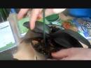 Сапрогумин работает Удобрение вернуло к жизни мои орхидеи