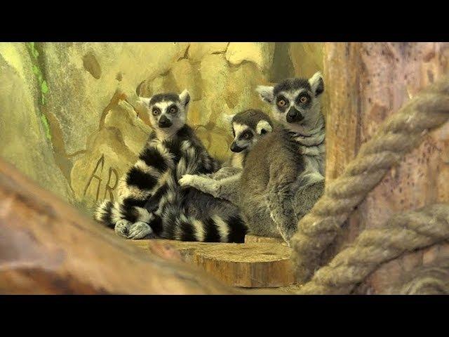 Контактний зоопарк MULTIZOO у Житомирі запрошує в мандрівку світом тварин - Житомир.info
