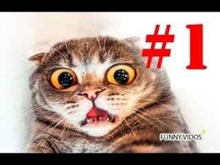Подборка лучших приколов 2018! Приколы с животными! Смешные собаки, кошки и испуги людей!