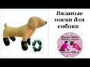 Вязанные носки для собаки