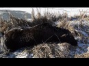 В Брагинском районе милиционеры спасли лося из ледяного плена