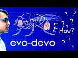 Evo-Devo (Despacito Biology Parody) A Capella Science