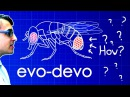 Evo Devo Despacito Biology Parody A Capella Science