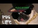 Собаки поют ROCSTAR