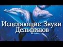 Исцеляющие Звуки Дельфинов Расслабляющая Музыка Relaxing Music Healing Dolphins Songs