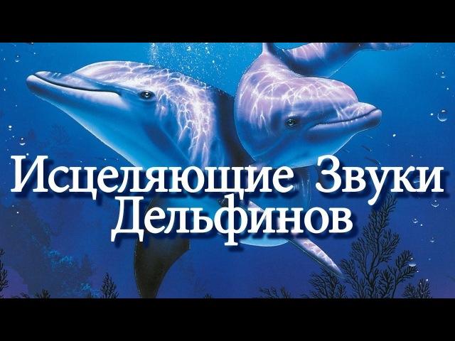 Исцеляющие Звуки Дельфинов / Расслабляющая Музыка / Relaxing Music Healing Dolphins Songs » Freewka.com - Смотреть онлайн в хорощем качестве