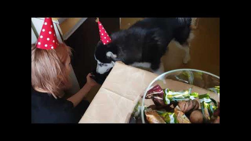 Боссу 1 год, 1.01.18, торт из говядины)