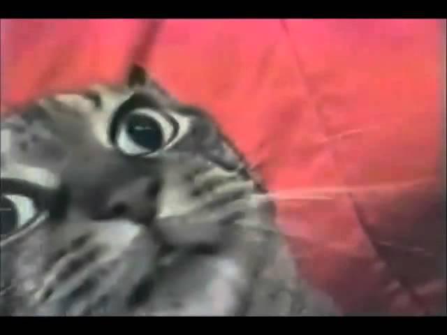Ticklish Cat