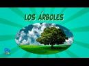 Los árboles Videos Educativos para Niños